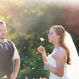 Wedding field long grass dandelion